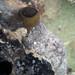 Brown sponge