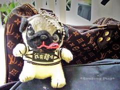 *SMILING PUG* - HAPPY VALENTINE'S DAY, GIFT IDEA , PUG KEY RING *-* (*SMILING PUG*) Tags: b dog bunny love smile smiling thailand happy holidays bangkok c smiles pug valentine mel valentines pugs buggy puggy k9 bambam    bugboy  bugbaby smilingpug