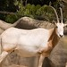 San Diego Zoo 070