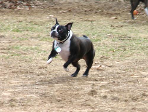 Ruby runs!