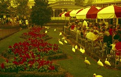 flowers and birds in redscale (Meleager) Tags: film canon disney magickingdom bluefilter t60 redscale