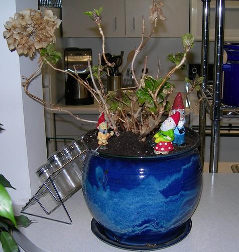 2008-04-05 Hydrangea