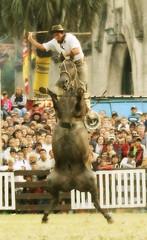 Se imponiendo (Eduardo Amorim) Tags: horses horse southamerica caballo uruguay cheval caballos cavalos prado montevideo pferde cavalli cavallo cavalo gauchos pferd hest hevonen chevaux gaucho  amricadosul montevidu hst uruguai gacho  campero amriquedusud  gachos  sudamrica suramrica amricadelsur  sdamerika jineteada   camperos americadelsud gineteada  americameridionale campeiros semanacriolla semanacriolladelprado campeiro eduardoamorim brilliant~eye~jewel