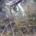 RotoruaWai-O-Tapu048 thumbnail