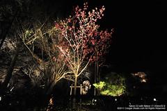 SUV_8781 (Cougar-Studio) Tags: castle nikon kyoto 京都 d3 nijo 二条城 nijocastle 世界遺產 元離宮 20110404
