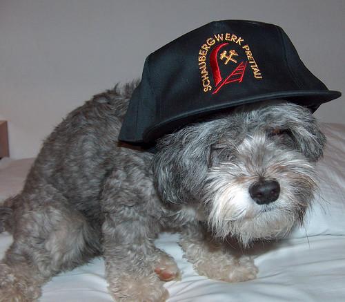 Foto cane divertente con cappello