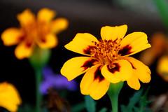uno dei mille fiori.