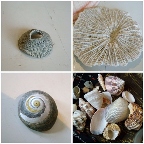japanese shell collection