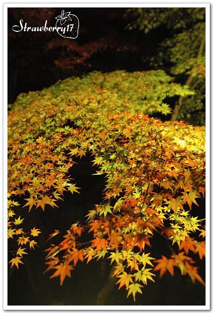 20071121京都永觀堂夜楓(17)