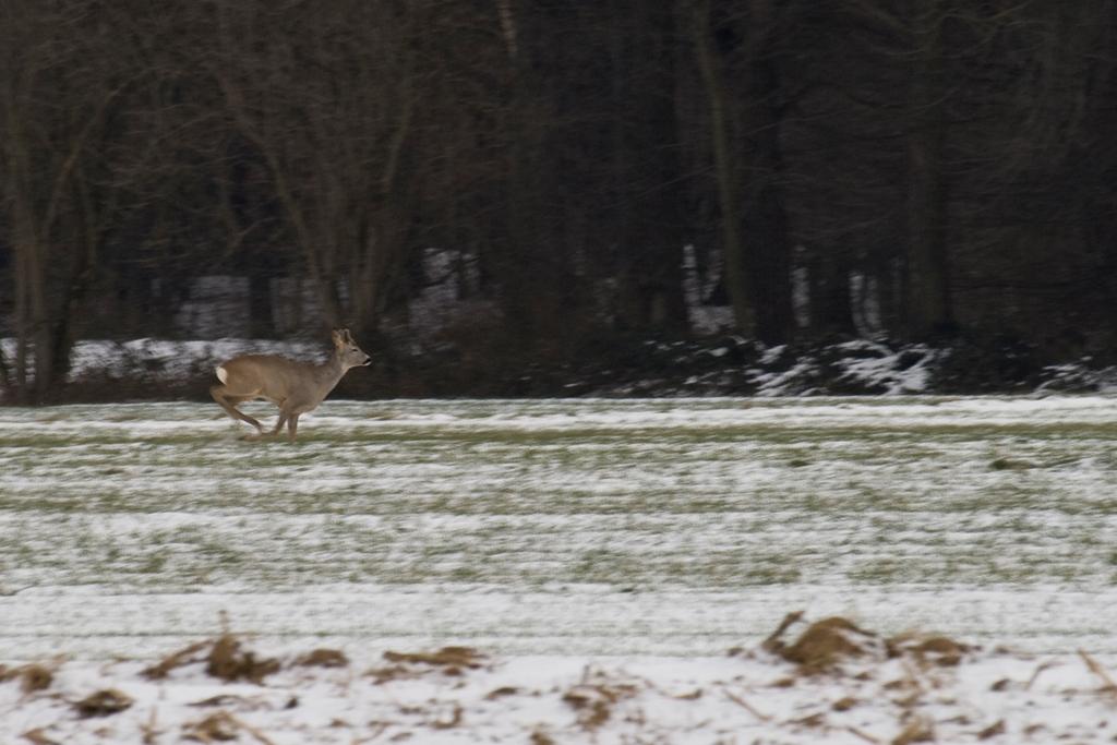 Chasing deers-2
