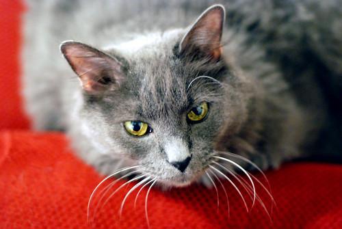 cat 059