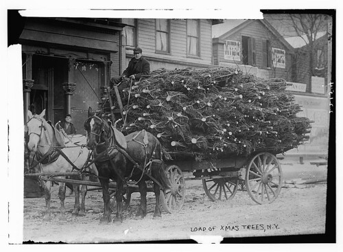 Load of Xmas trees, N.Y. (LOC)