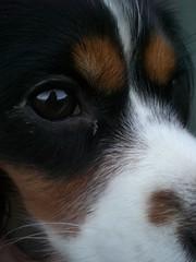 Finchen (saskiiiia) Tags: dog eye hund auge