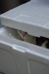 変わった猫だよホントに