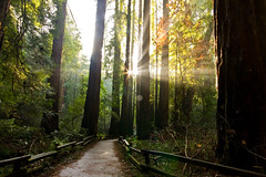 Muir Woods Morning Light (Caleb Keiter) Tags: sanfrancisco morning trees light sunlight nature colors sunshine forest sunrise woods path wideangle muirwoods redwood rays enchanted beamsoflight sigma1020mmf456exdchsm eos40d canon40d