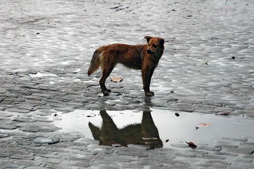 Stray dog in the rain por designwallah.