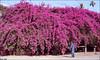 No Doubt !! (Twiggy Tu) Tags: flowers trees me digital taiwan twiggy memycamera photobybrad sonyf88 lomopeoplelomolife ilovepeachcolor