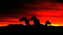 Red Storm Mustangs (iceman9294) Tags: sunset horses clouds bravo colorado dusk mustang chriscoleman elpasocounty avision colorphotoaward iceman9294 briargatemustangs world100f