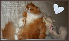 Toby and TJ (iwork4toby) Tags: red cat persian persiancat redpersian luv2explore