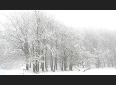 verschneite Eiertage (Lichtwechsel) Tags: schnee winter canon germany deutschland nebel hessen highkey ostern ulf wald eos300d baum frühling hoherodskopf ulfbeck bergwerk7