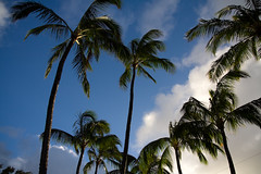palms on Kauai's north shore