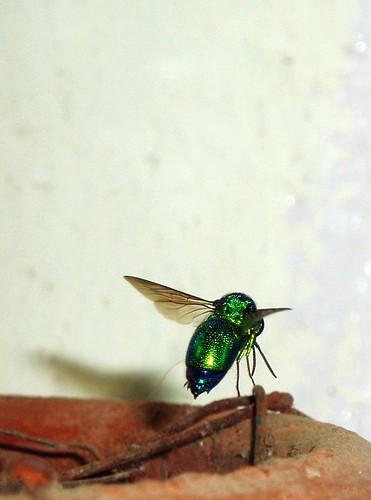 green flyin bug