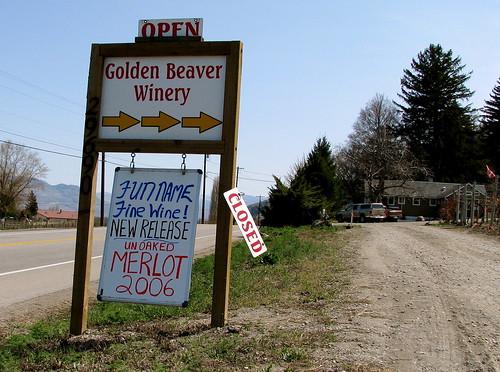 Golden Beaver