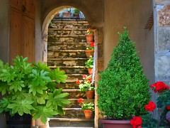 Doorway and Steps in Reeth in Swaledale, Yorkshire (UGArdener) Tags: england english unitedkingdom britain yorkshire steps boxwood pelargonium fatsia swaledale reeth riverswale englishtravel