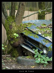 car VS tree (clasch) Tags: auto tree chevrolet abandoned car moss rust cemetary rusty voiture camaro scrapyard nikkor wreck rost arbre baum moos mousse rouille cimetire wrack abandonn 55200 autofriedhof pave d40x grbetal kaufdorf