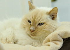 Ming - 14 year old neutered male