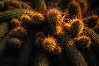 Rise of the Cacti