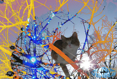 March cat (in_visible) Tags: light wallpaper sky abstract art window colors collage cat photoshop wow spiral energy searchthebest mosaic invisible dream mandala fantasy fractal uf4