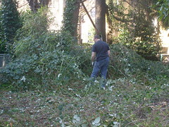 Clearing the blackberries. (pieisexactlythree) Tags: home yard garden weeds jon blackberry ivy patio