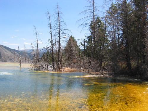 Yellowstone National Park-4
