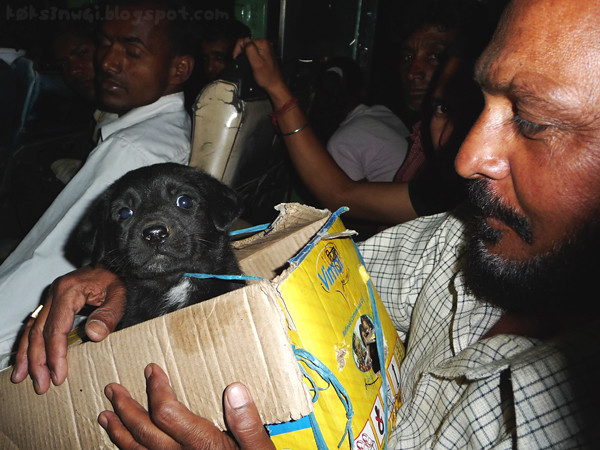 Man with Labrador Puppy on Bus to Dalhousie