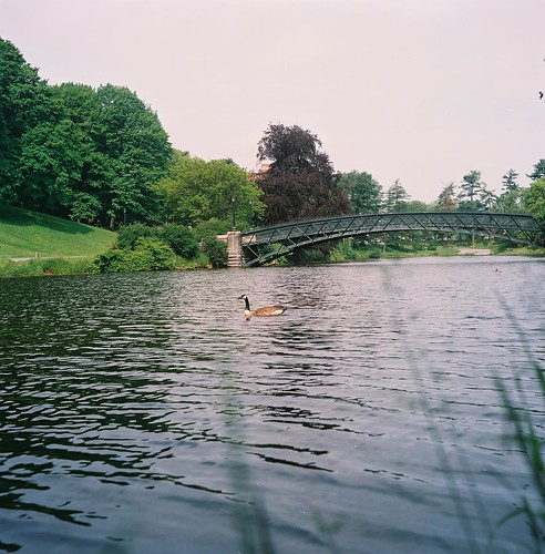Duck swimming along Washington Park Lake, Albany NY with Rolleiflex