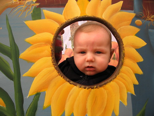 Damien the Sunflower