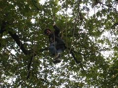 Jeremy dans les arbres