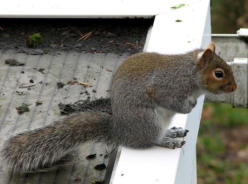 Squirrel hatching a plan