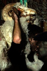 Carnevale etnico (Enrico Balzano) Tags: sardegna carnevale cagliari maschera barbagia etnico mamoiada tradizione mamuthone