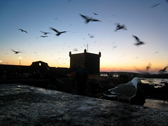 (xNstAbLe) Tags: blue sea sky orange bird twilight tramonto mare blu seagull gull flight volo morocco marocco arancio essaouira gabbiano