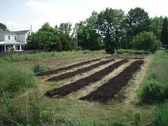 P6050174 (north slope farm) Tags: loading spreading composting northslopefarm