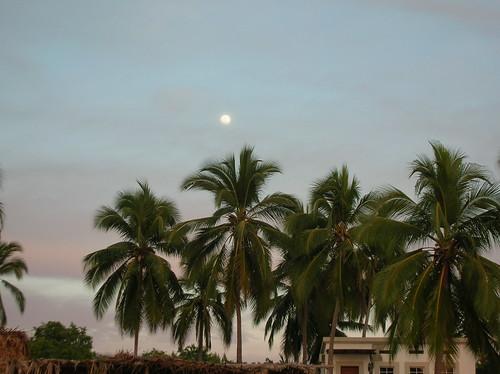 Moon & Palms