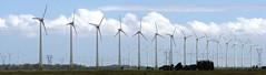 Wind Farm_2