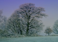 Trees in the frost (John Pritchett) Tags: winter frost sheffield bradway