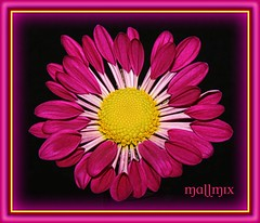 """Quinta Flower"" Viva com paixo!!! (mallmix ((OFF))) Tags: world flowers amigos flower macro brasil canon mix fdsflickrtoys bravo flickr searchthebest natureza vivid esperana breathtaking bh lifeshot excellence simplicidade naturesfinest wonderworld ideia blueribbonwinner firstquality supershot magicdonkey flickrsbest specnature fantasticflower masterphotos goldenmix abigfave artlibre worldbest platinumphoto cmeradeourobrasil anawesomeshot impressedbeauty aplusphoto ultimateshot specinsect irresistiblebeauty superbmasterpiece goldenphotographer wowiekazowie diamondclassphotographer flickrdiamond superhearts frhwofavs ishflickr ysplix excellentphotographerawards flickrelite orvalhadas creativephotograhers wwrusa macromix amobhradicalmente mauriciomix1yahoocombr colourartaward fiveflickrfavs wonderfulworldmix macromarvels mallmix thedropsofrain mallmix2008"