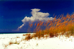 Sea Oats Against a Dramatic Sky (StevenM_61) Tags: beach grass clouds sand 2000 unitedstates florida shoreline grains pensacola pensacolabeach seaoats gulfislandsnationalseashore fortpickensstatepark
