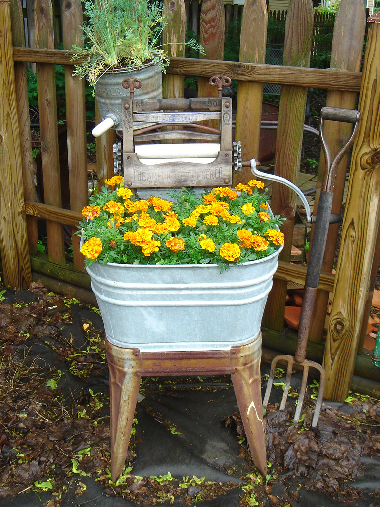 organic Marigolds