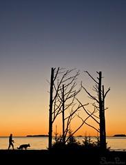 20100927_07513b (Fantasyfan.) Tags: sunset sea dog art topv111 tag3 taggedout night finland tag2 tag1 walker oulu silhoette fantasyfanin toppila meritoppila siirretty
