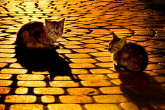 In the center of town (Gilad Benari) Tags: street city sunset urban cats cat israel telaviv different pavement stray lonely   gilad ramatgan    catsphotos benari  israelimages